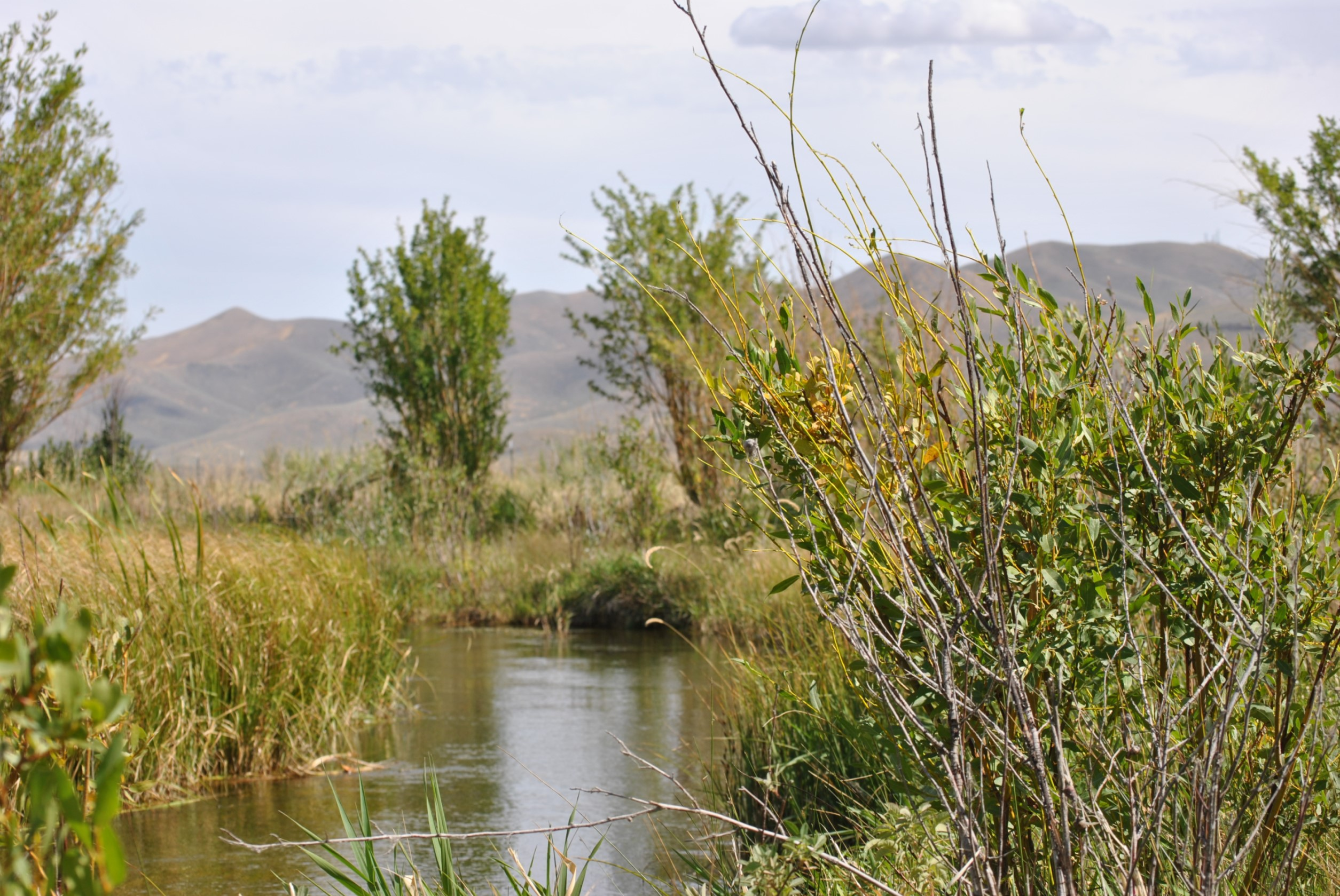 Image of a wetland in Idaho with a creek running through the middle.